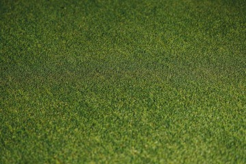 green grass texture, closeup view