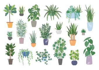 Collection of decorative houseplants isolated on white background. Bundle of trendy plants growing in pots or planters. Set of beautiful natural home decorations. Flat colorful vector illustration.