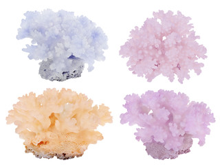 four color dense corals isolated on white