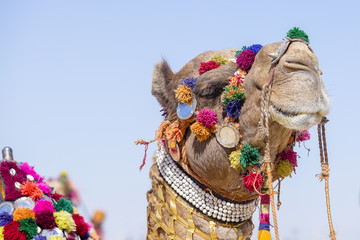 Head of a camel decorated with colorful tassels, necklaces and beads. Desert Festival, Jaisalmer, India