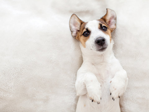 Puppy lying on bed