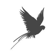 Parrot icon, vector illustration on white background