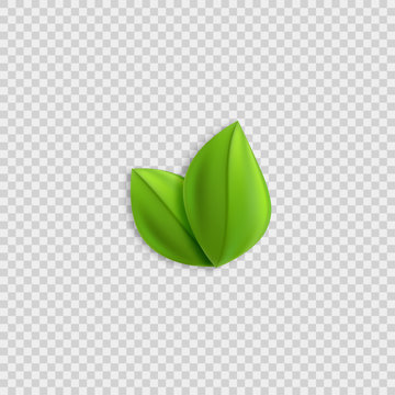 Fresh green realistic leaves vector design element