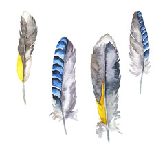 Set of grey and blue feathers isolated on white background. Hand drawn watercolor illustration.
