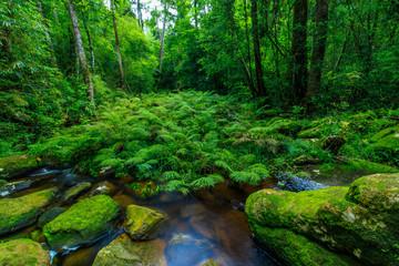 Green fern in the stream in rainforest.