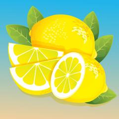 lime illustration vector