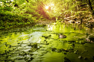 Green trees reflecting in a river running through