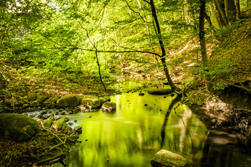 Green forest in the summer reflecting colors