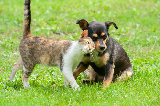 cat and dog  friendship are touching their heads. Beautiful animal .Cat and dog love