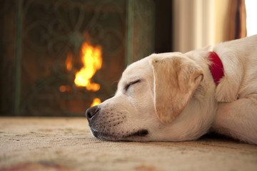 Puppy sleeping in front of a fireplace
