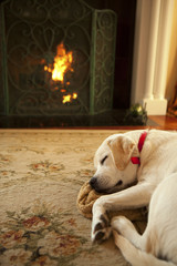Dog sleeping in front of a fireplace