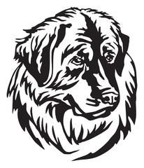 Decorative portrait of Dog Leonberger vector illustration