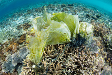 Discarded Plastic Caught on Corals Underwater