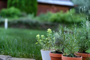 Foto op Canvas Kruiderij herbs in pots