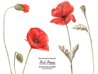 Red Poppy by watercolor