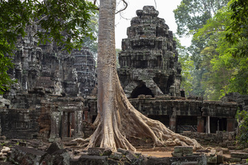 Ancient stone ruin of Banteay Kdei temple, Angkor Wat, Cambodia. Ancient temple and old tree.
