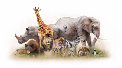 Fototapete - Group of Zoo Animals Together Isolated