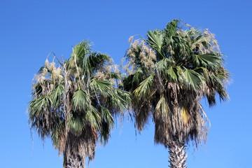 Palm tree wiev