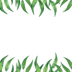 Watercolor border frame with eucalyptus leaves. Illustration on white background for invitations, cards, business cards, weddings.