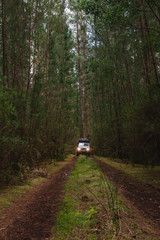 4x4 car in a deep forest