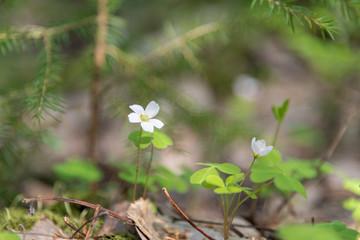 White, small fildflowers,