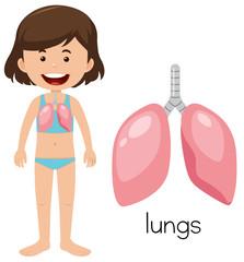 A Cartoon of Human Lung
