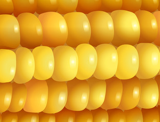 Magnified image of a corn
