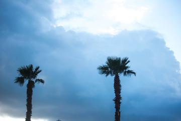 Palm trees against blue sky, Palm trees on tropical coast coconut tree, summer tree