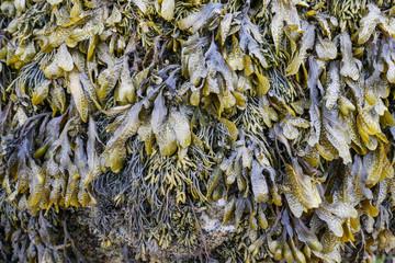 Detail and closeup of beautiful ocean seaweed