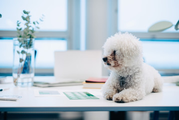 Dog sitting on desk at creative office
