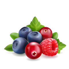 Blueberry, raspberry and cranberry Sweet forest berry. 3d vector Realistic illustration