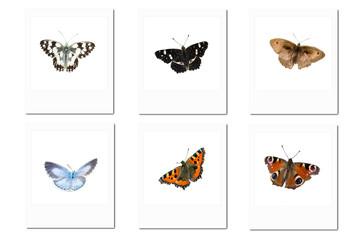 Verschiedene Schmetterlinge Polaroidfotos