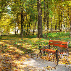 Beautiful autumn park with paths and benches.