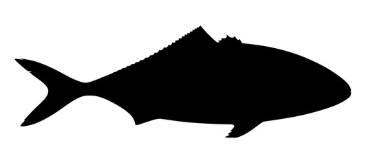 Silhouette of tuna fish on white background. Vector illustration.