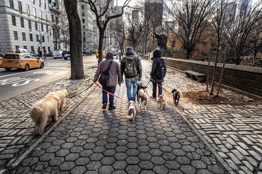 Dog walkers NYC