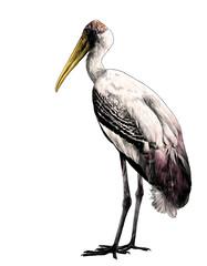 bird stork stands in full height sideways