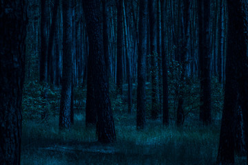 night in the pine forest moonlit moonlight grass and trees