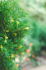 yellow flowers and green tree