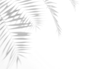 Shadows from palm trees on a white wall