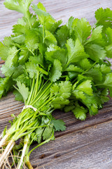 fresh coriander or cilantro bouquet
