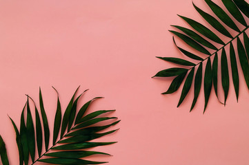 Variations of tropical palm leaves on light texture. Creative tropical leaves on pink background, copy space, closeup. Banner