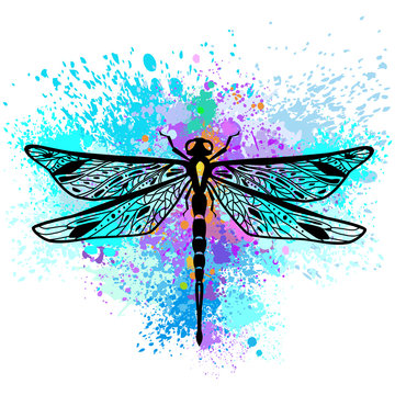 Dragonfly on colorful background