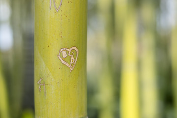 branch of bamboo forest with heart carving on a bright day background