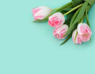 Bouquet of pink tulips on blue background
