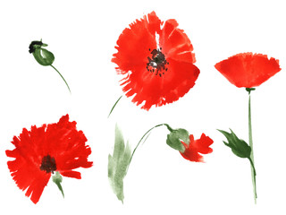 Red poppy flowers by watercolor
