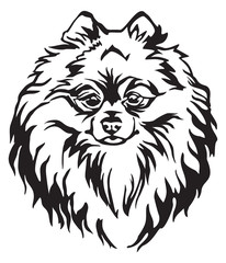 Decorative portrait of Dog Pomeranian Spitz vector illustration