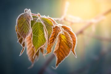 Laub im Winter mit Raureif