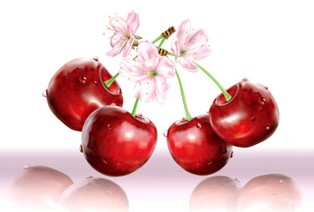 Wall Mural - Cherries and flower on white pink