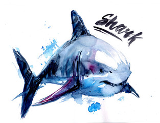 Watercolor shark