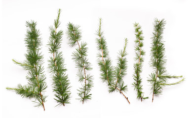 floral branches of larch with needles on the background isolated